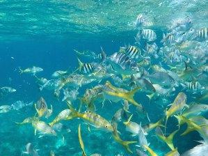 Haciendo snorkel en Cayo Levisa, Cuba