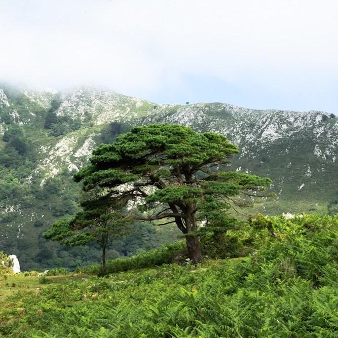 Vistas durante la ruta al Pico Pienzu en la sierra del Sueve, Asturias