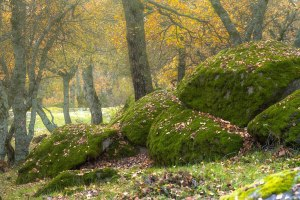 Camino a través del Bosque de la Herrería hacia la Silla de Felipe II, El Escorial
