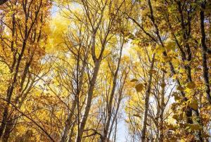 Árboles en la Sierra del Rincón de Madrid, en otoño