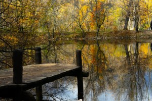 Estanque en el Bosque Finlandés de Rascafría, Madrid