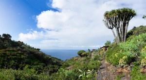 En Garafía, La Palma, existe la mayor concentración de dragos de Canarias