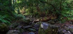 Ruta del Cubo de la Galga entre laurisilva, La Palma