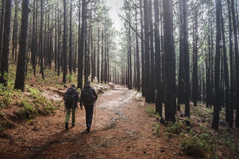 Inicio de la ruta de los Volcanes en el pinar en torno al Refugio del Pilar, La Palma