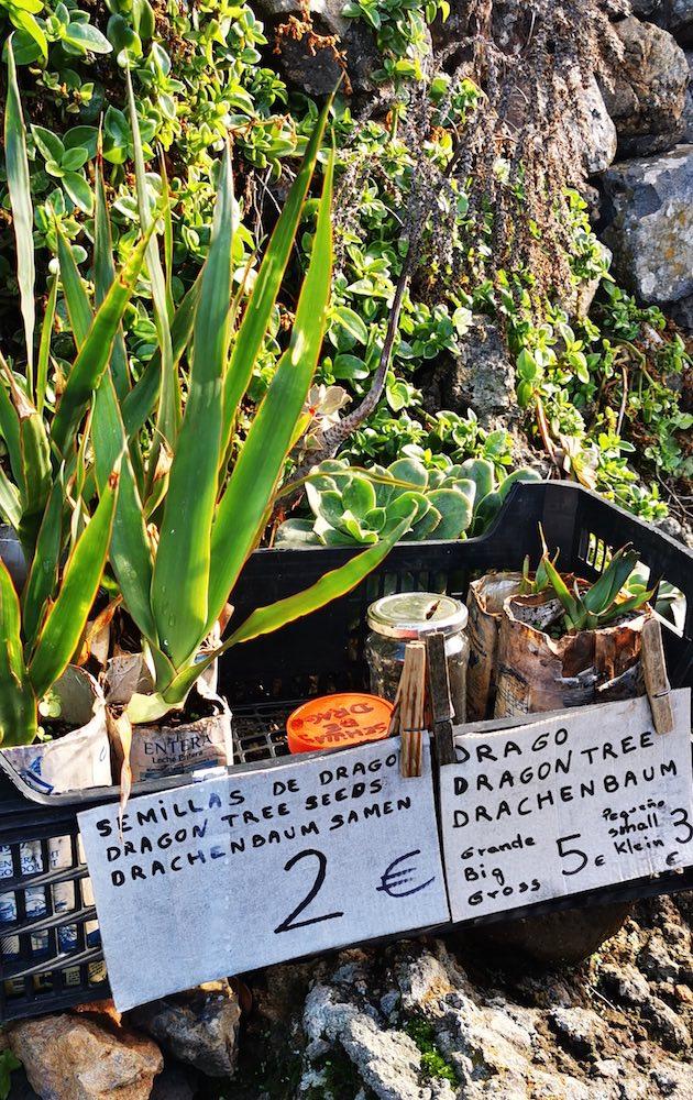 Puestos de auto venta en la ruta de los dragos en Las Tricias, La Palma