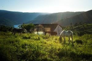 Atardecer en Cristosende, Ribeira Sacra, Galicia