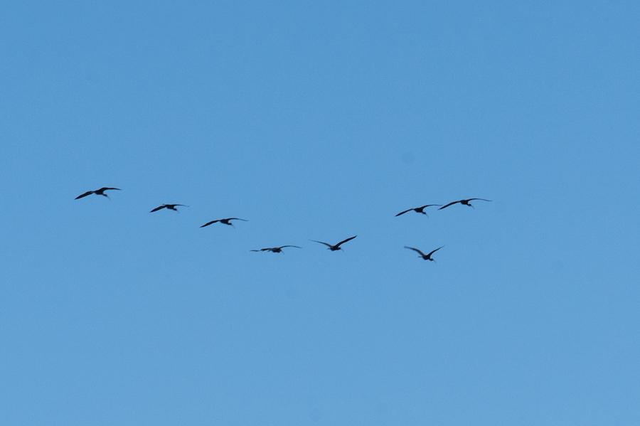 Aves volando sobre la Albufera
