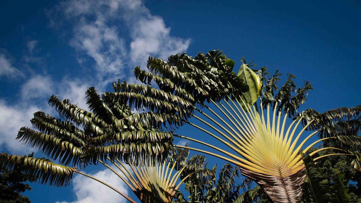 Un día en Guadalupe: Las Antillas Francesas
