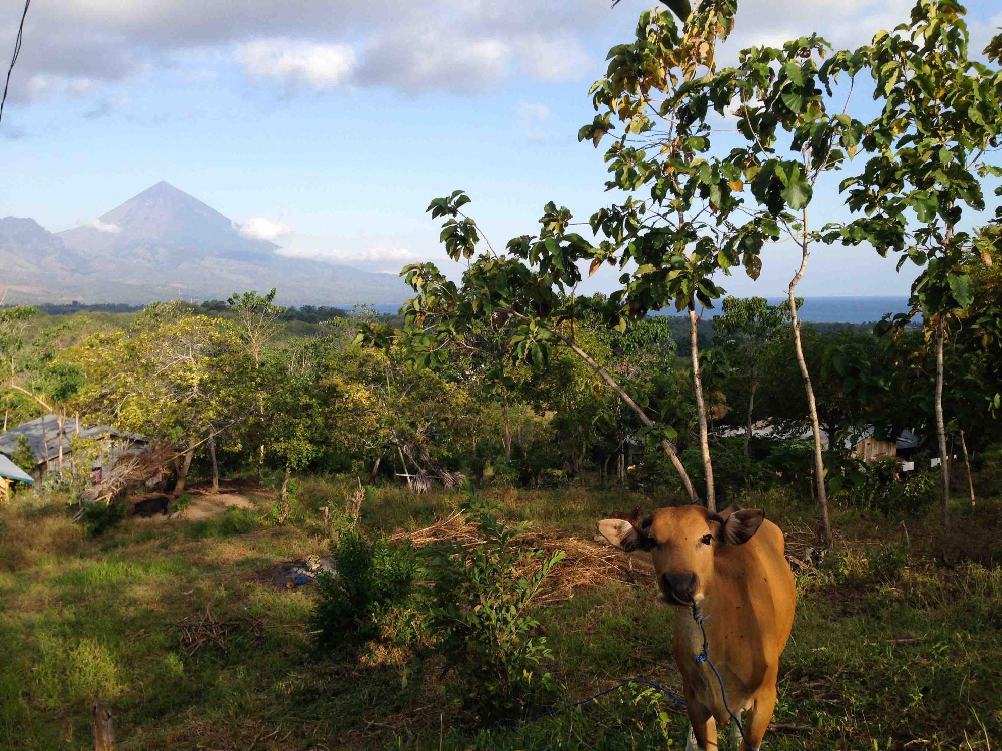 Isla-de-Flores-Indonesia