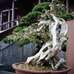 Monasterio-Chi-Lin