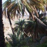 Falaj-Misfat-Oman