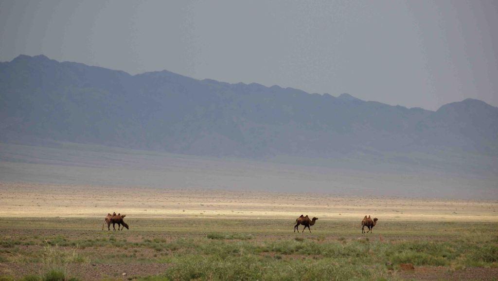 que-ver-desierto-gobi-itinerario-mongolia