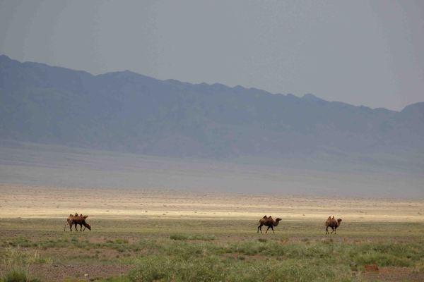 Que ver en el Desierto de Gobi