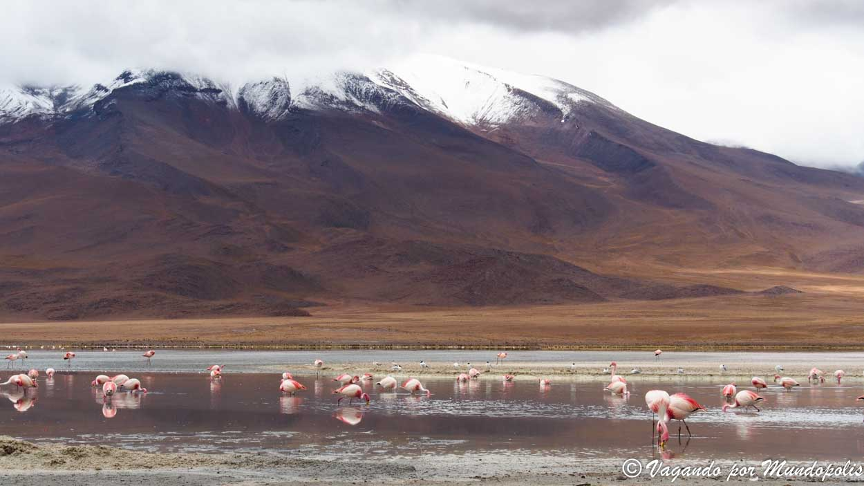 tour-atacama-uyuni-4-dias-bolivia
