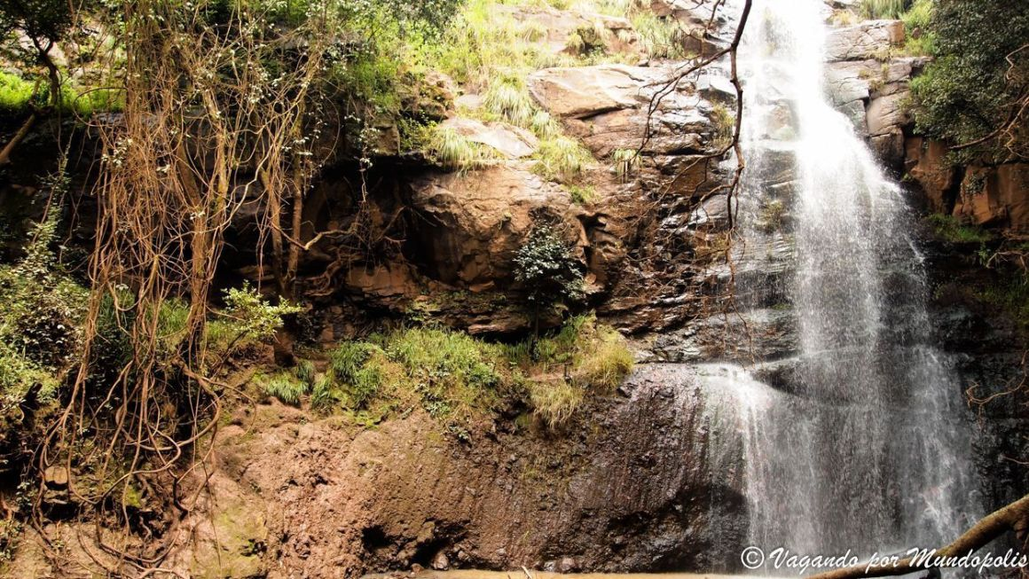 Menagesha-National-Forest-Etiopia