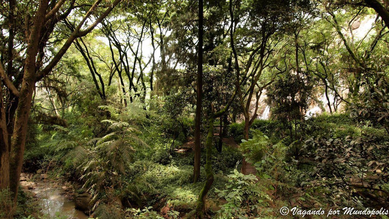 Menagesha-National-Forest-Etiopia