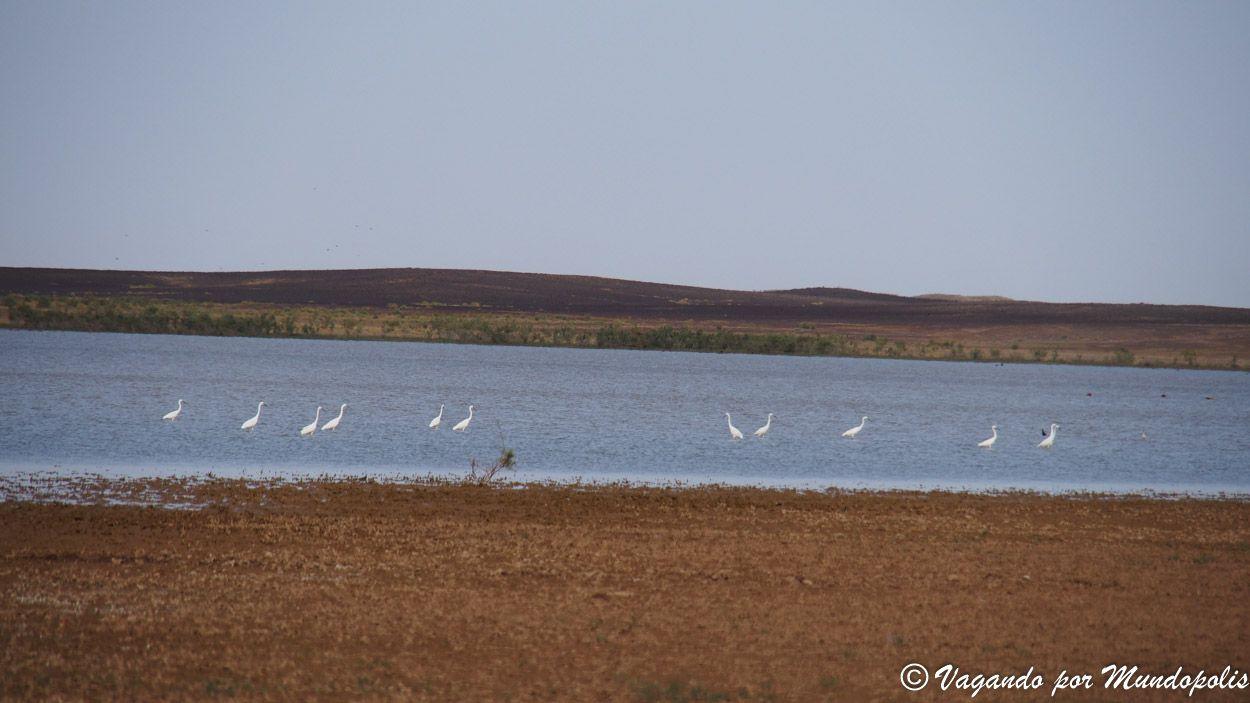lago-de-los-flamencos-merzouga