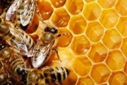 Curso técnico apicultura 01