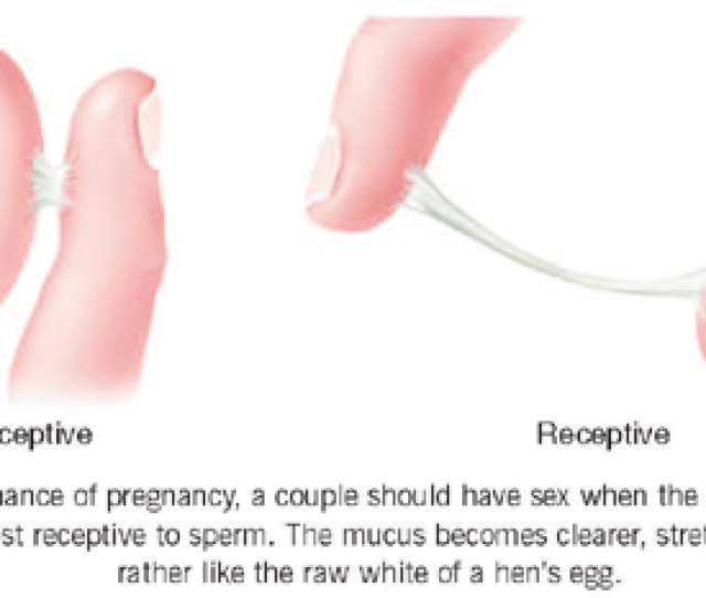 During Ovulation The Cervical Mucus Can Be Stretched In Between Your Fingers Up To 6 Inches It Will Be Much Easier To Conceive During This Period Of Time
