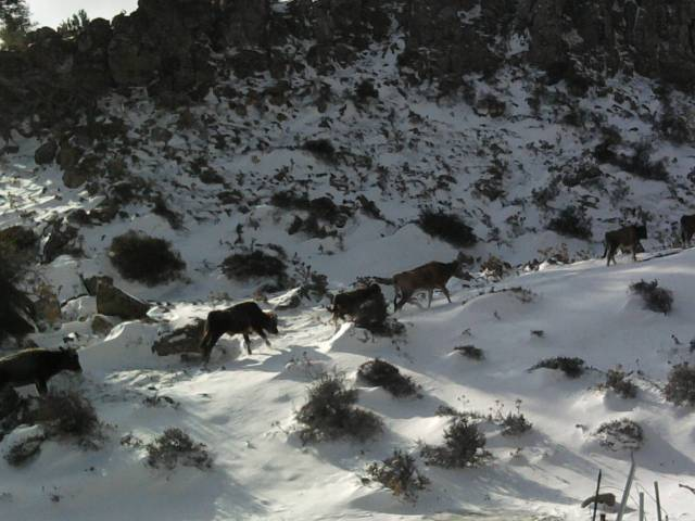 Bornova Snow Hike