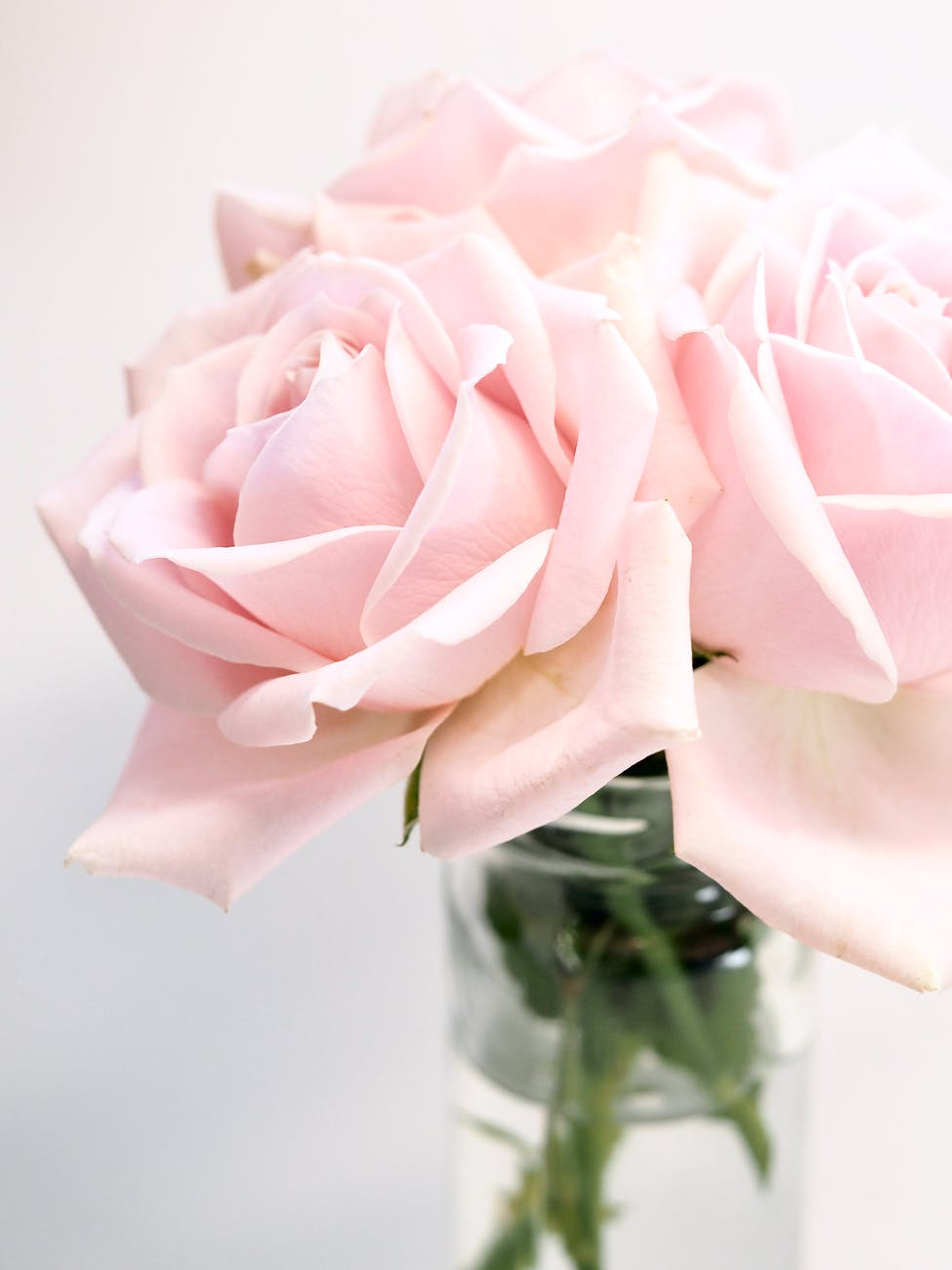 close up photography of roses