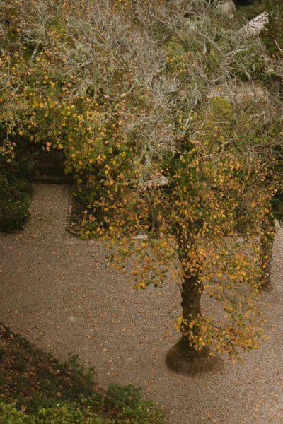 DSC04904-sintra-portugal-chateau-maures-moorish-castle-moors-castelo-mouros