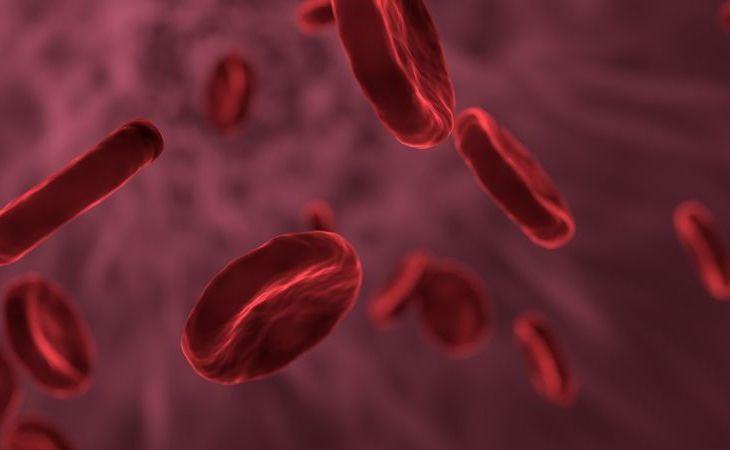 kraujas -hamatologas