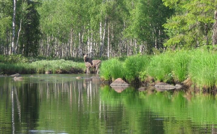Vakantaseren, Lapland, Voigt Travel