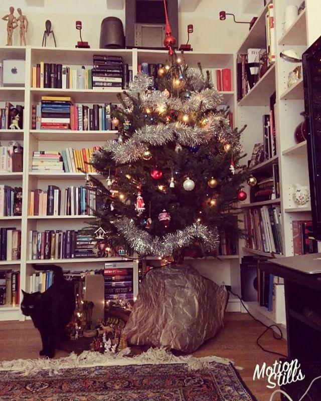 #xmastree #cat