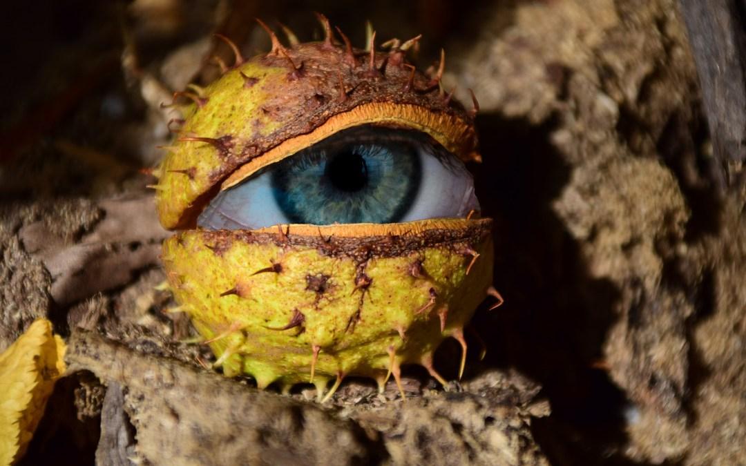 9 révélations (d) étonnantes sur la vie et les mœurs de la châtaigne