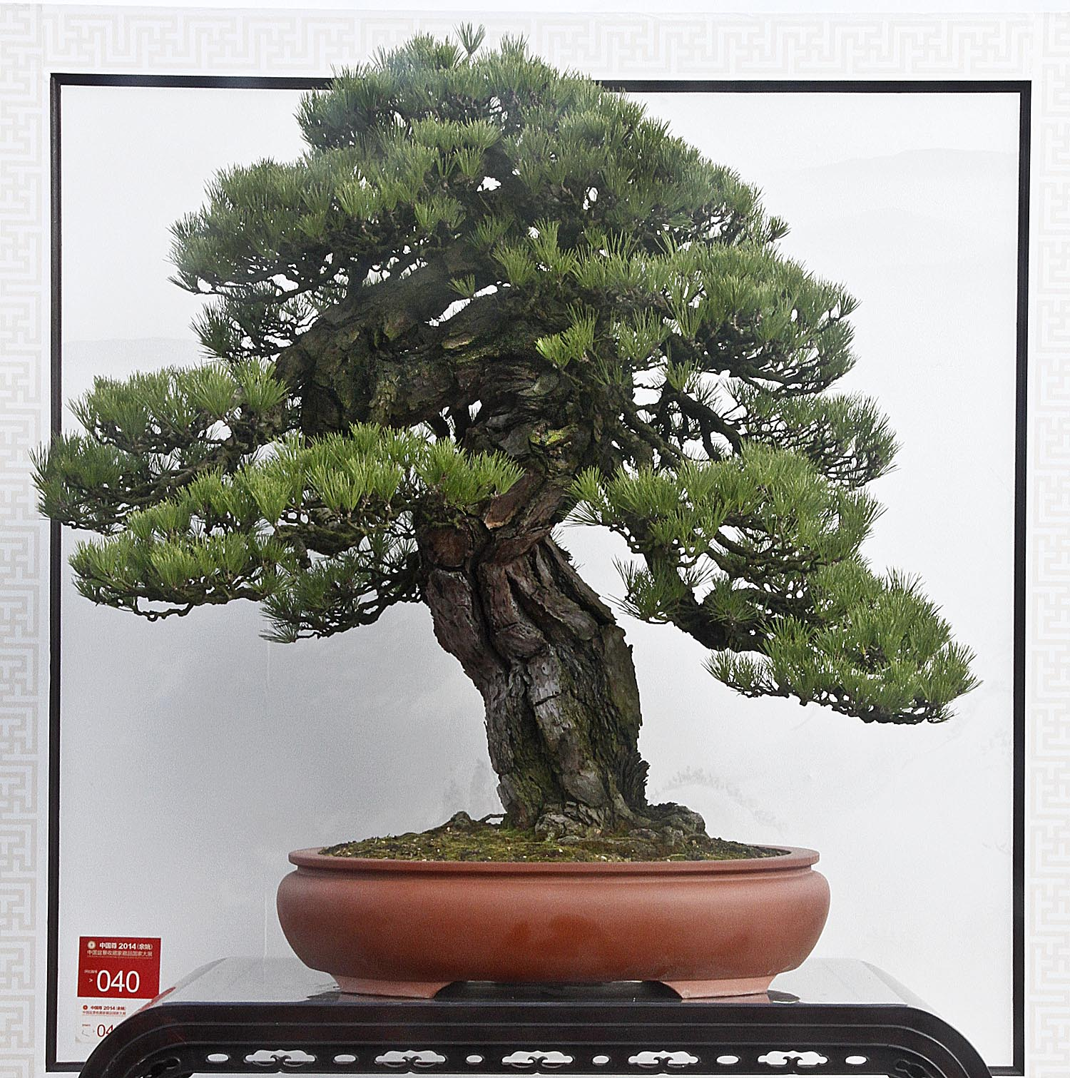 China National Penjing Exhibition Part 2 Valavanis Bonsai Blog