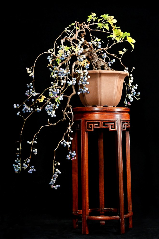 porcelain-berry