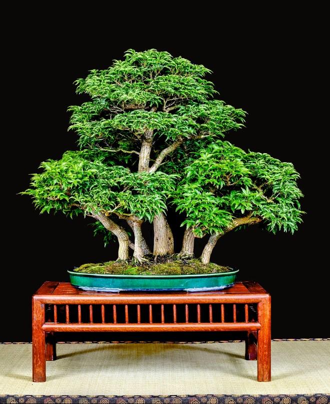 TREE 21-4793