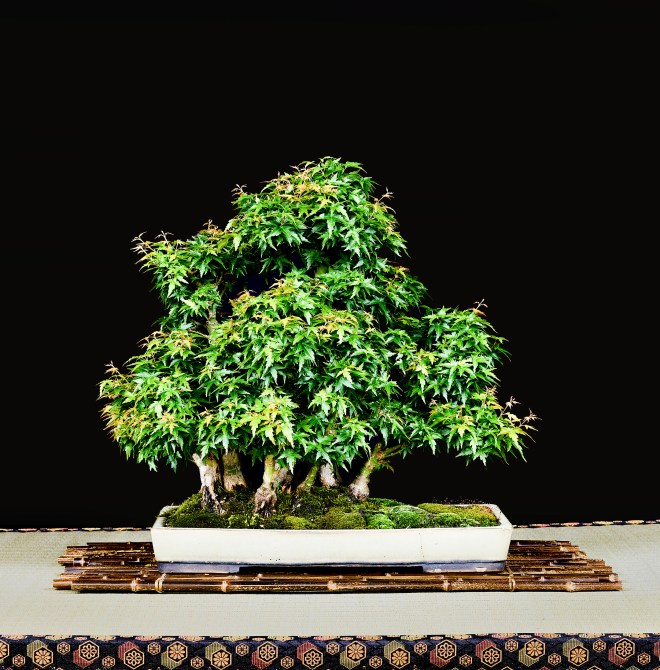 TREE 28-4823
