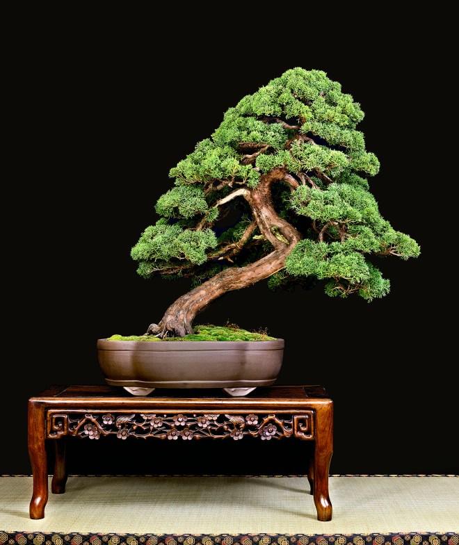 TREE 3-4637 1C