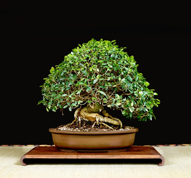 TREE 52-4908