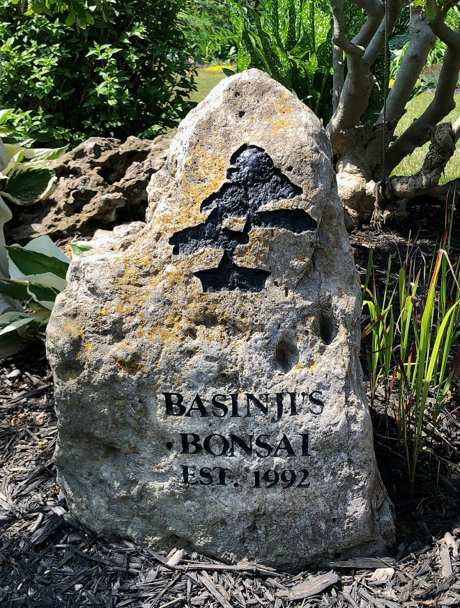 Meet Bob Blankfield Valavanis Bonsai Blog