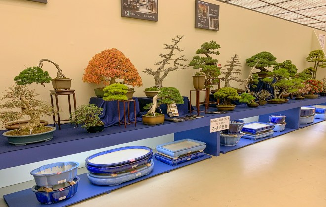 2018 38th Nippon Bonsai Taikan Exhibition Part 3 Valavanis Bonsai Blog