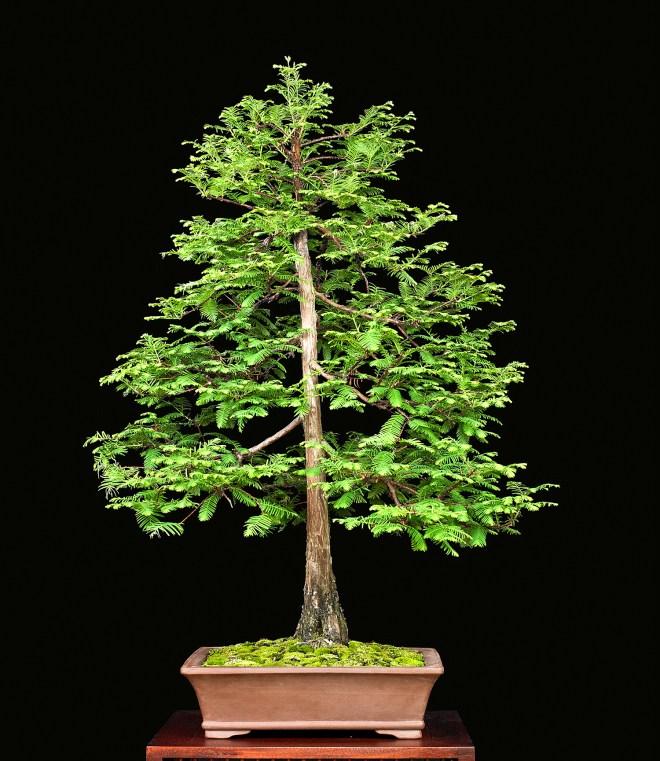 TREE 640053.JPG