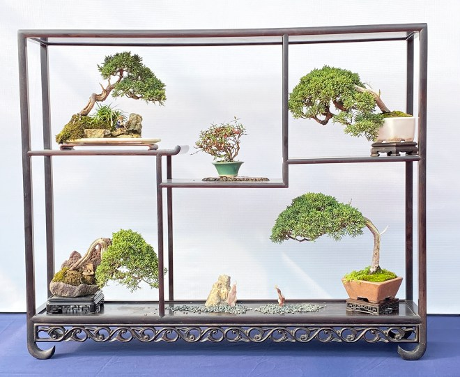 October 2019 Valavanis Bonsai Blog