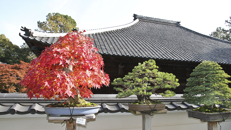 Japan International Bonsai Tour Exploration Autumn 2013