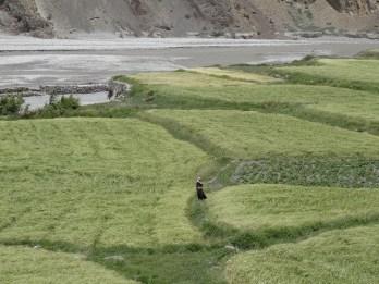 Eine Frau in den Feldern bei Kagbeni (Grenze unteres/oberes Mustang)