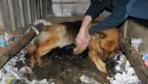 Conditions de naissance de chiots destinés aux animalerie