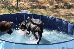 Mia découvre la piscine