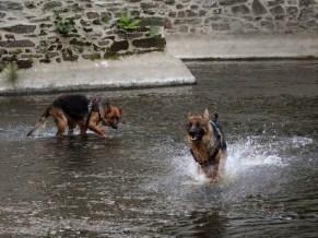 Matcho se régale à courrir dans l'eau