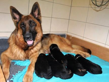 Lovana et ses bébés de 2 semaines