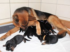 Avec ses premiers bébés