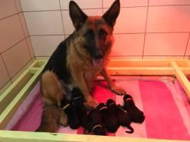 Leska et ses bébés