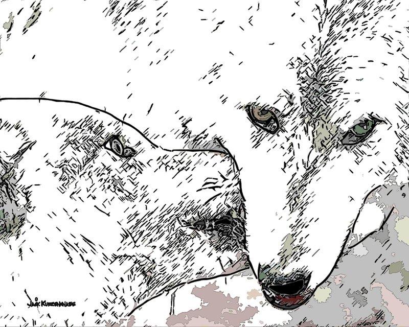 Le loup actif en Quint
