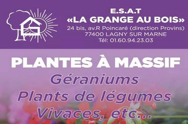 """Lagny sur Marne ► Vente de plantes à massif à l'ESAT """"La Grange au Bois"""""""